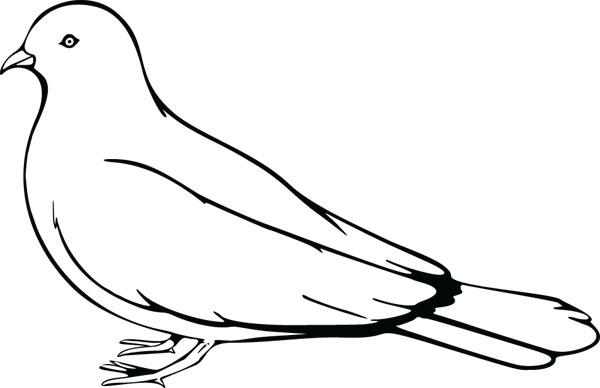 600x388 Pidgeons Clipart Black And White