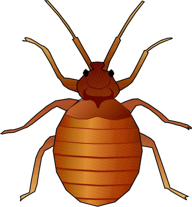 667x720 Animated Insect Clipart