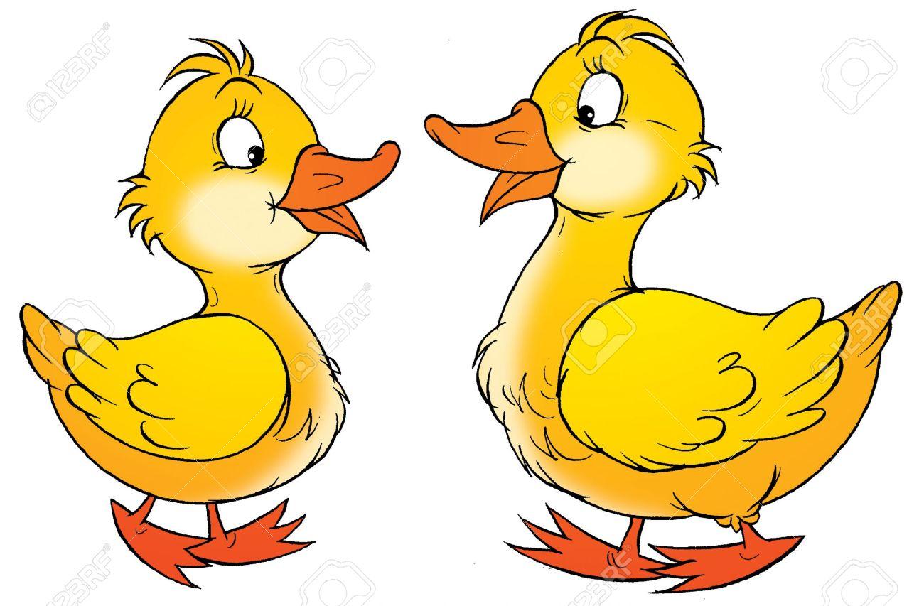 1300x853 Drawn Duck Animated