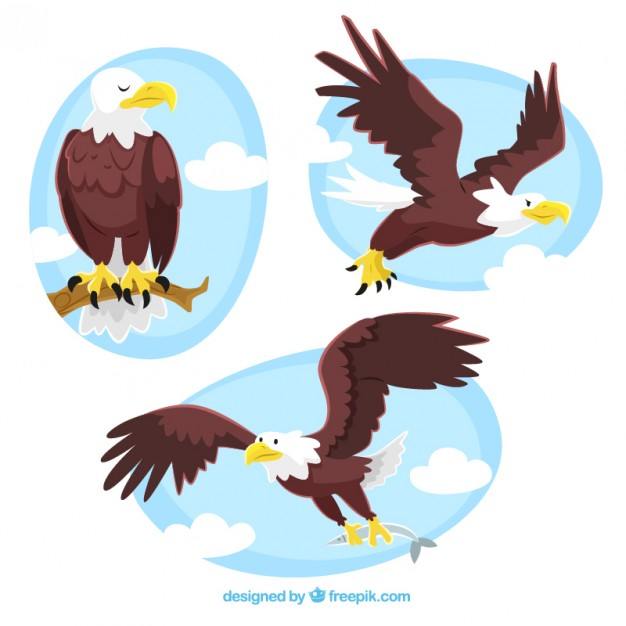 626x626 Eagle Vectors, Photos And Psd Files Free Download