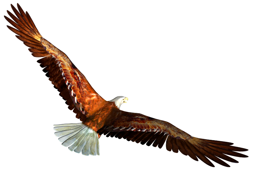 853x602 Bald Eagle clipart animation