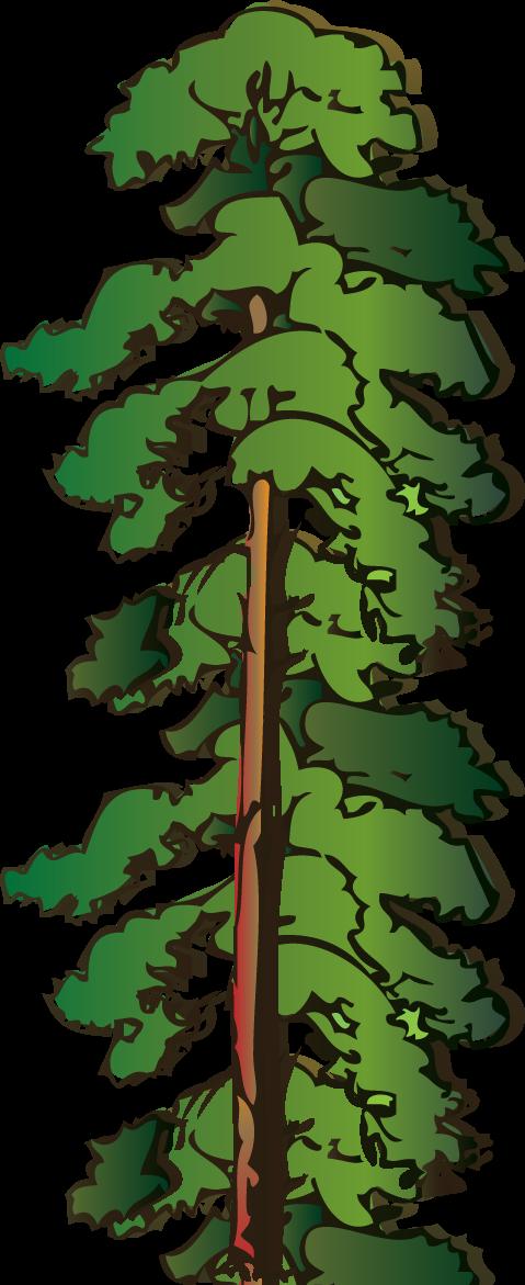 479x1171 Drawn Pine Tree Animated