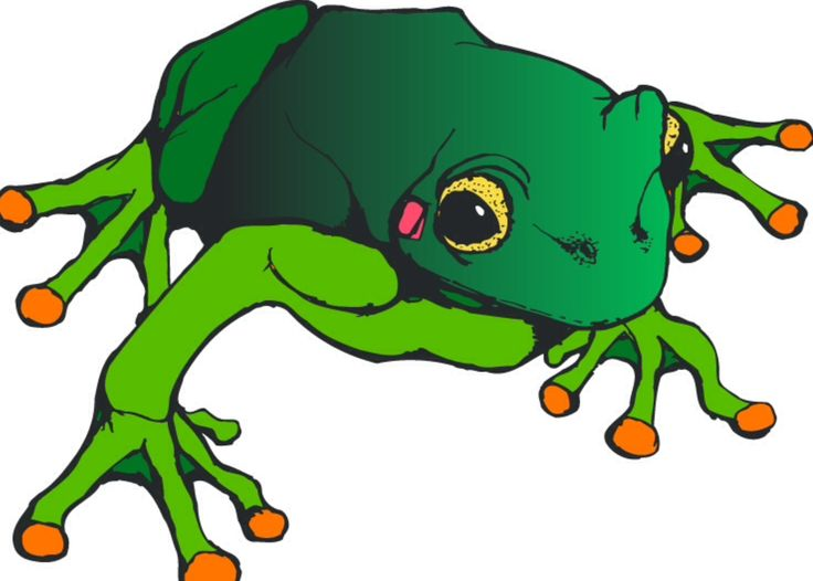 736x526 26 Best Frogs Images Projects, Activities