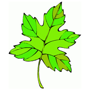300x300 Leaves Clipart Animated