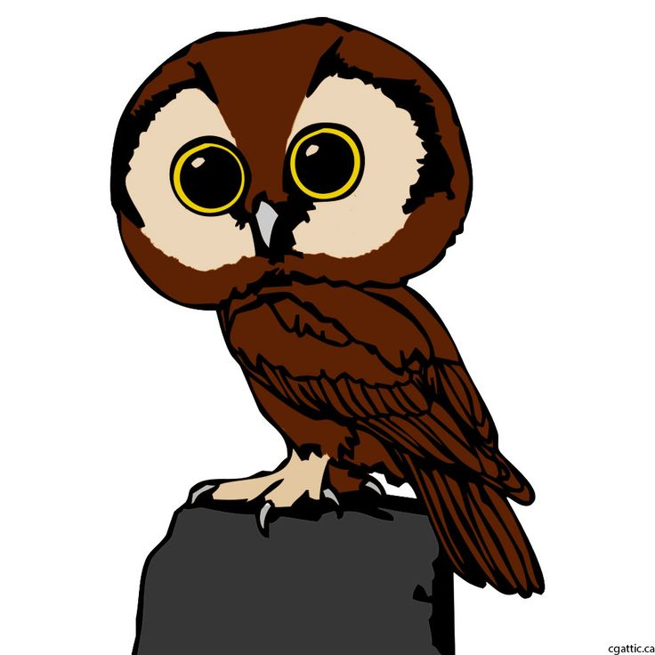 Animated Owl Pictures | Free download on ClipArtMag