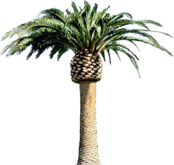 352x335 Drawn Palm Tree Animated Gif