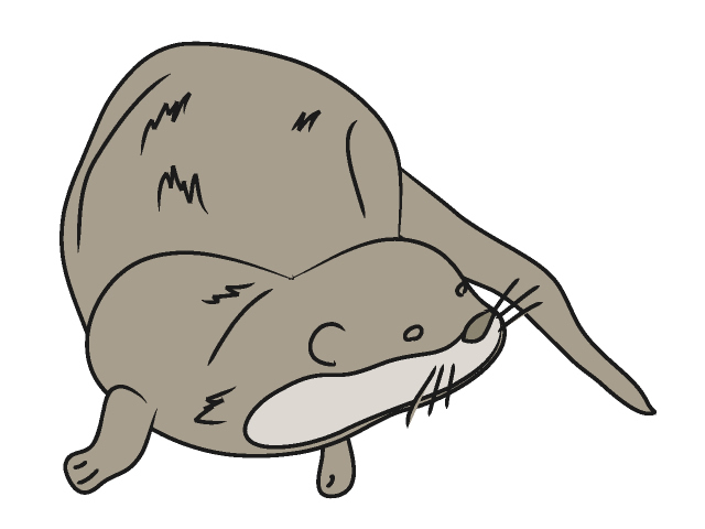 640x480 Best Otter Clipart