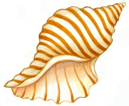 Animated Sea Shells