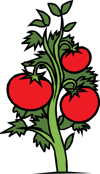 342x594 Cherry Tomato Clipart Animated