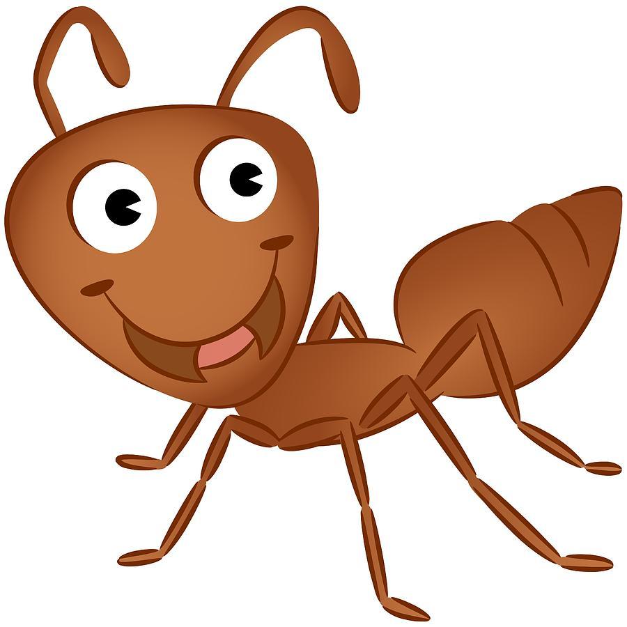 900x900 Ant clipart orange