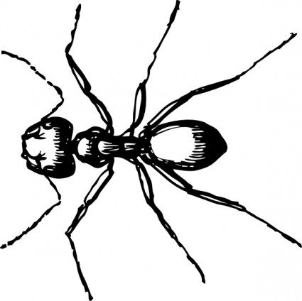 425x424 Ant Clipart Black And White Clipart Hash Image
