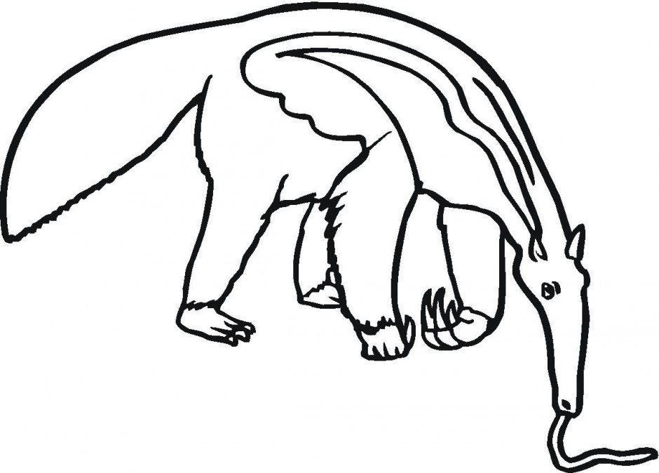 940x674 Anteater Clipart Ant Clipart