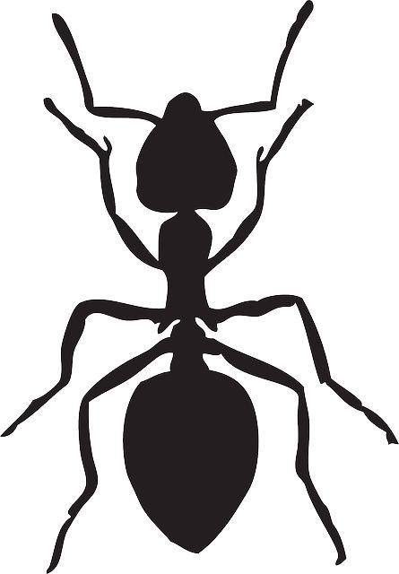 445x640 Drawn Ant Clip Art
