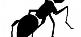 272x125 Ant Black And White Clip Art Ants Biezumd