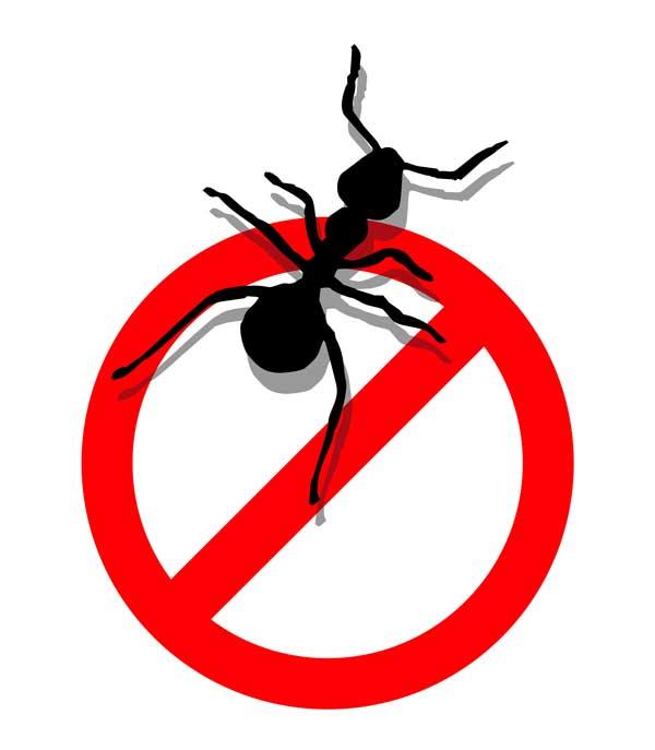600x687 Ants Clipart Pest