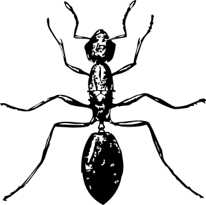 300x298 Ant Clip Art