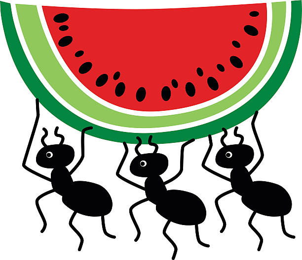 612x528 Ants Clipart Watermelon