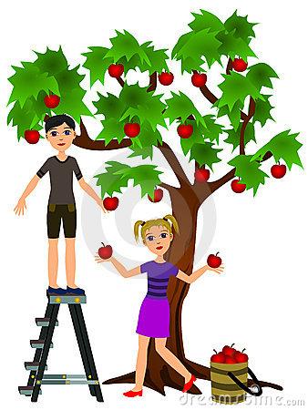 338x450 Harvest Clipart Apple Picking