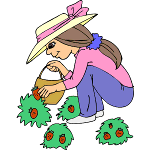 300x300 Strawberry Clipart Strawberry Picking