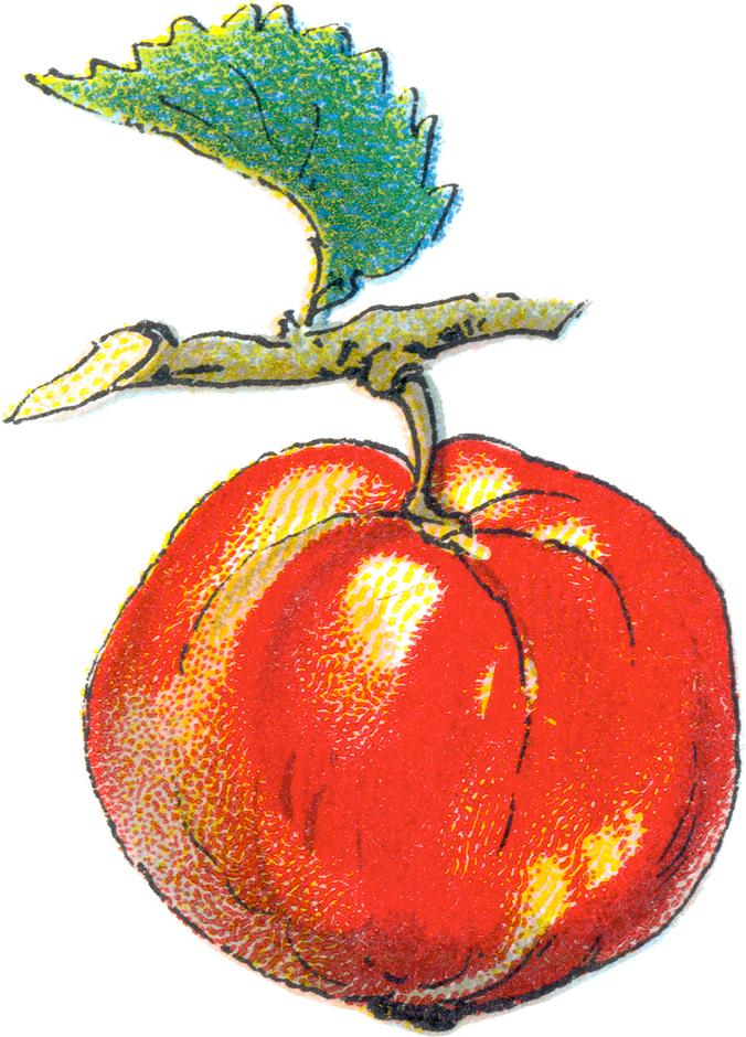 676x940 Vintage Apple Clip Art