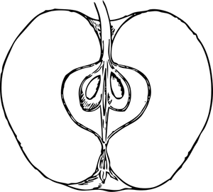 300x271 221 Apple Free Clipart Public Domain Vectors