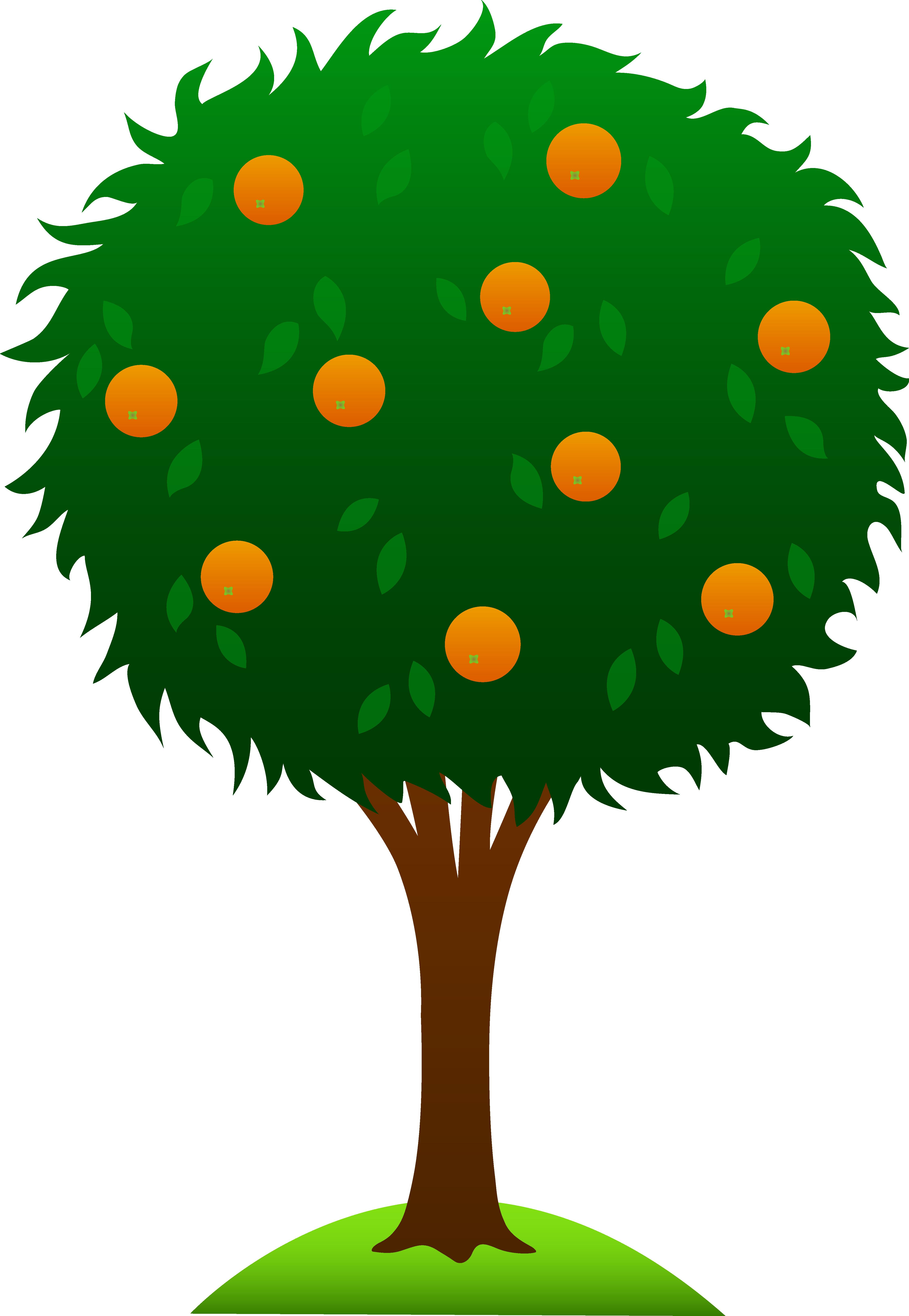 4497x6508 Sweet Orange Tree