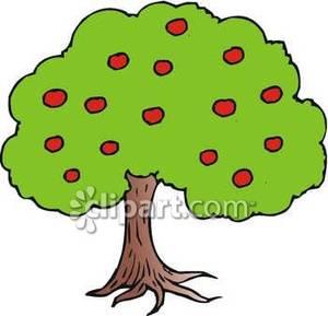 300x289 Apple Tree