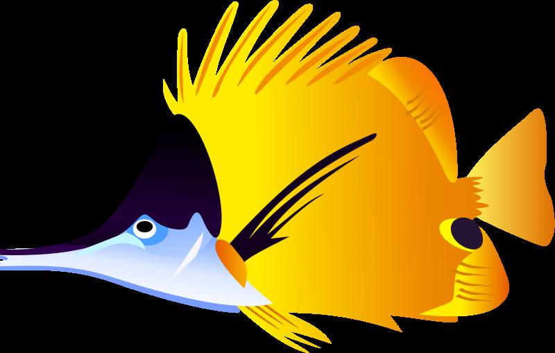 800x509 Clipart Fish Free Tropical