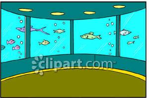 300x198 Fish Aquarium