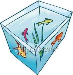 290x300 In A Fish Tank