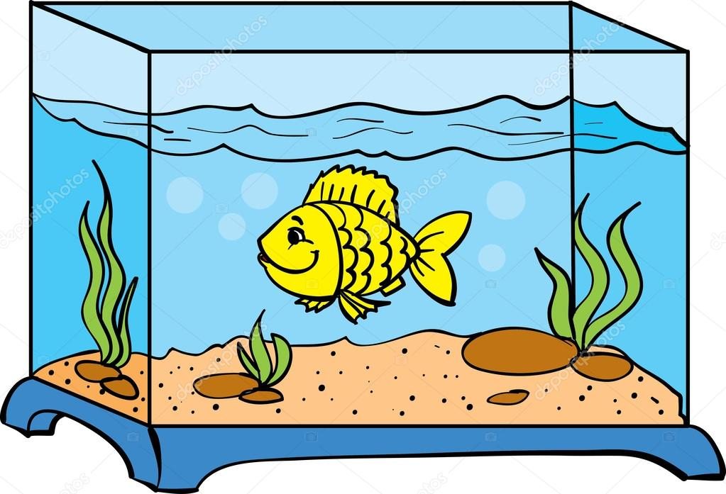 how to separate fish in an aquarium