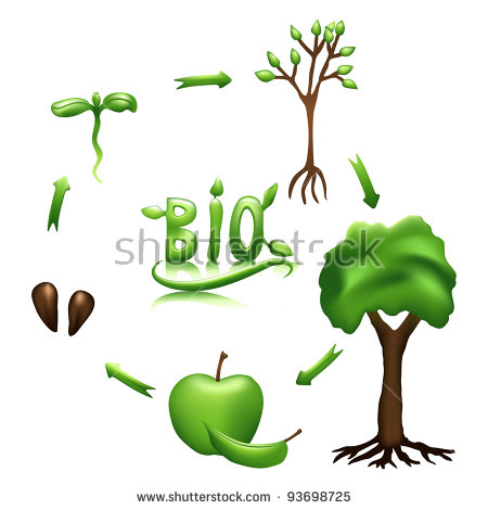 450x470 Plant life cycle clipart
