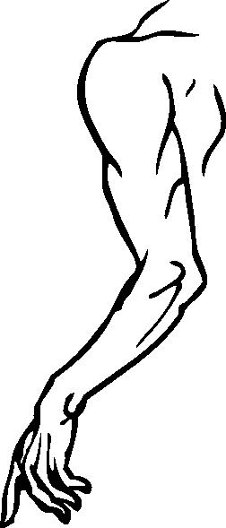 252x589 Left Arm Clip Art