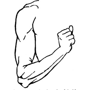 300x300 Shoulder Clipart Black And White