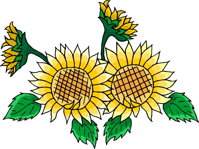 August Flower Clipart Free Download Best August Flower Clipart On