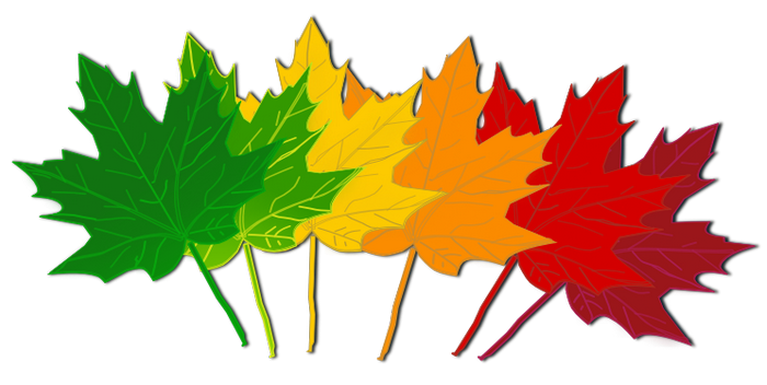 700x352 Fall leaves clip art beautiful autumn clipart 3 image clipartix