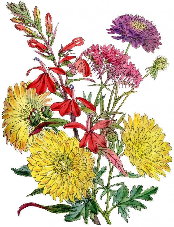 736x961 Bouquet Clipart Fall Mums