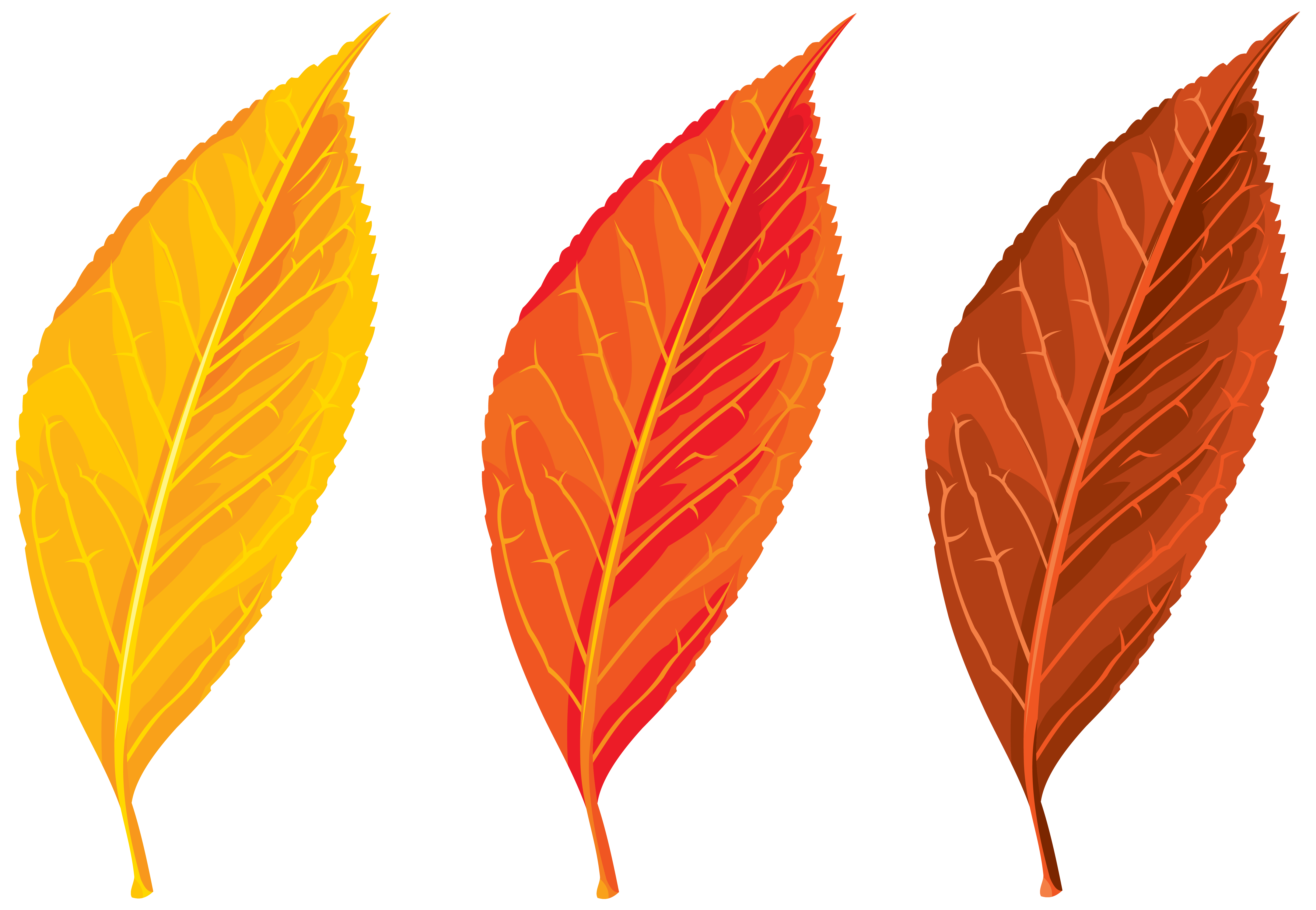 6204x4291 Autumn Leaves Set Clipart Png Imageu200b Gallery Yopriceville