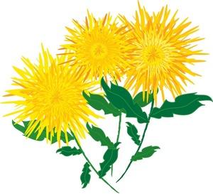 300x273 Autumn Chrysanthemum Clipart