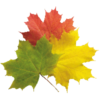 200x200 Download Autumn Leaves Free Png Photo Images And Clipart Freepngimg