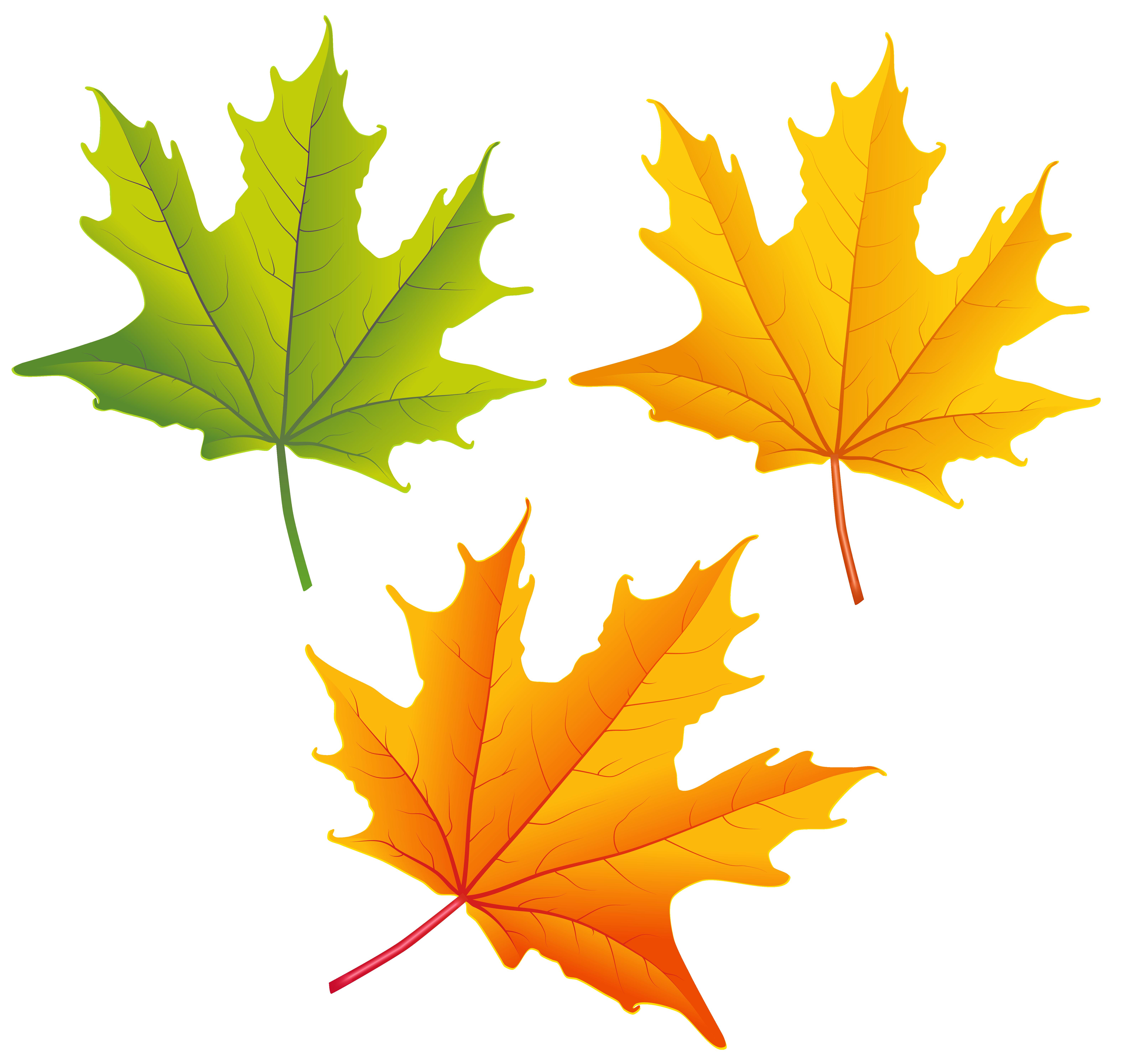 6312x5975 Clip Art Autumn Leaves Yellow