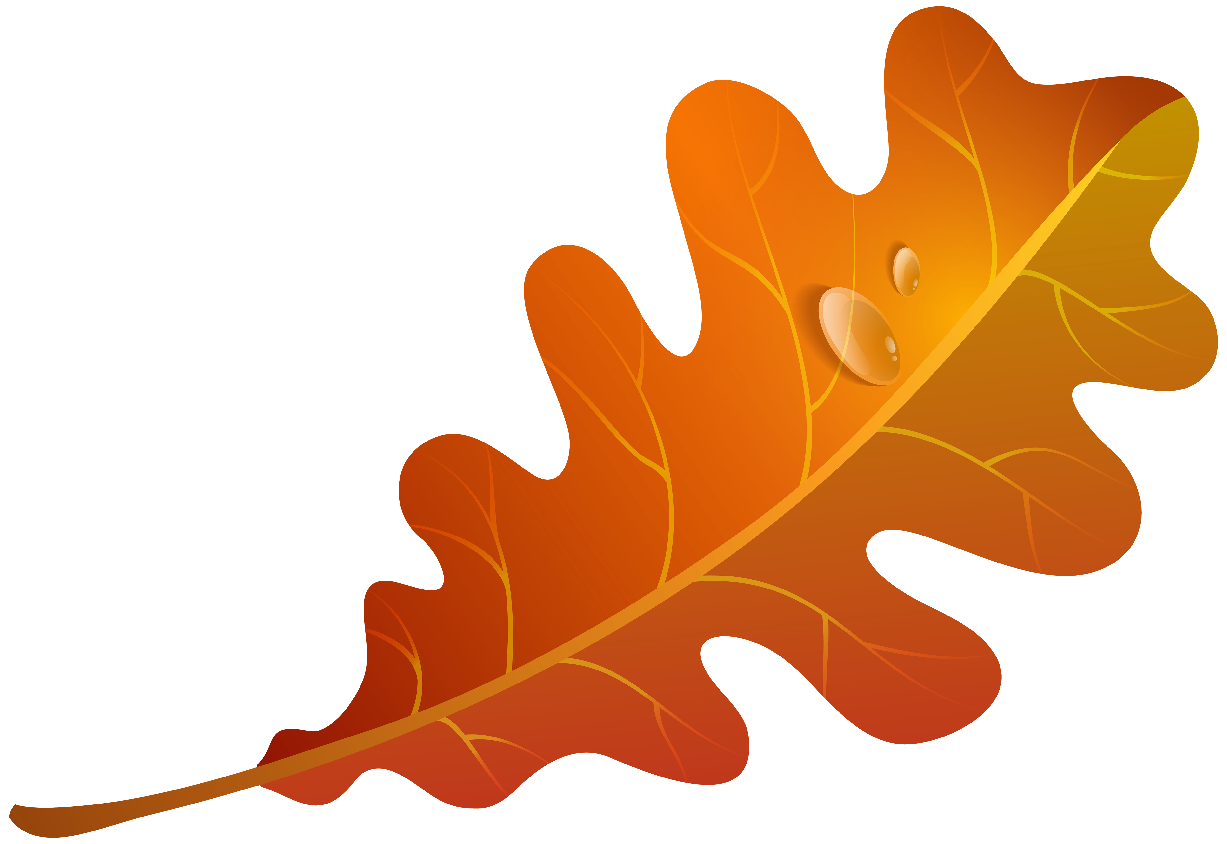 5000x3439 Edit And Free Download Fall Orange Leaf Png Clipart Image