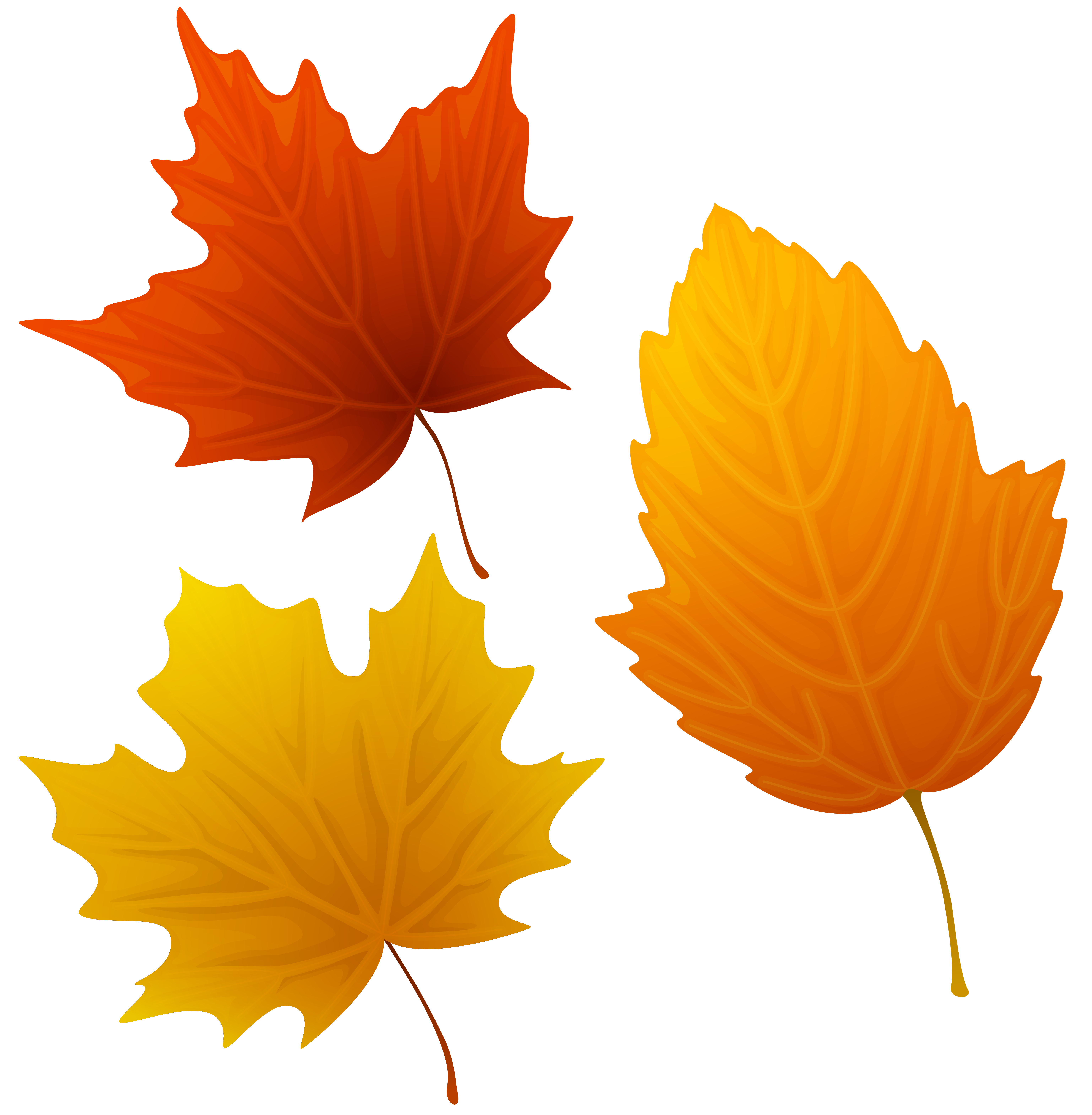 Autumn Leaf Clipart | Free download on ClipArtMag