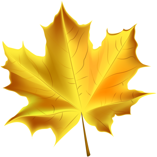 599x600 Beautiful Yellow Autumn Leaf Transparent Png Clip Art Image