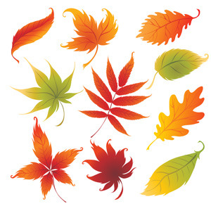 300x300 Colorful Autumn Leaves Vector
