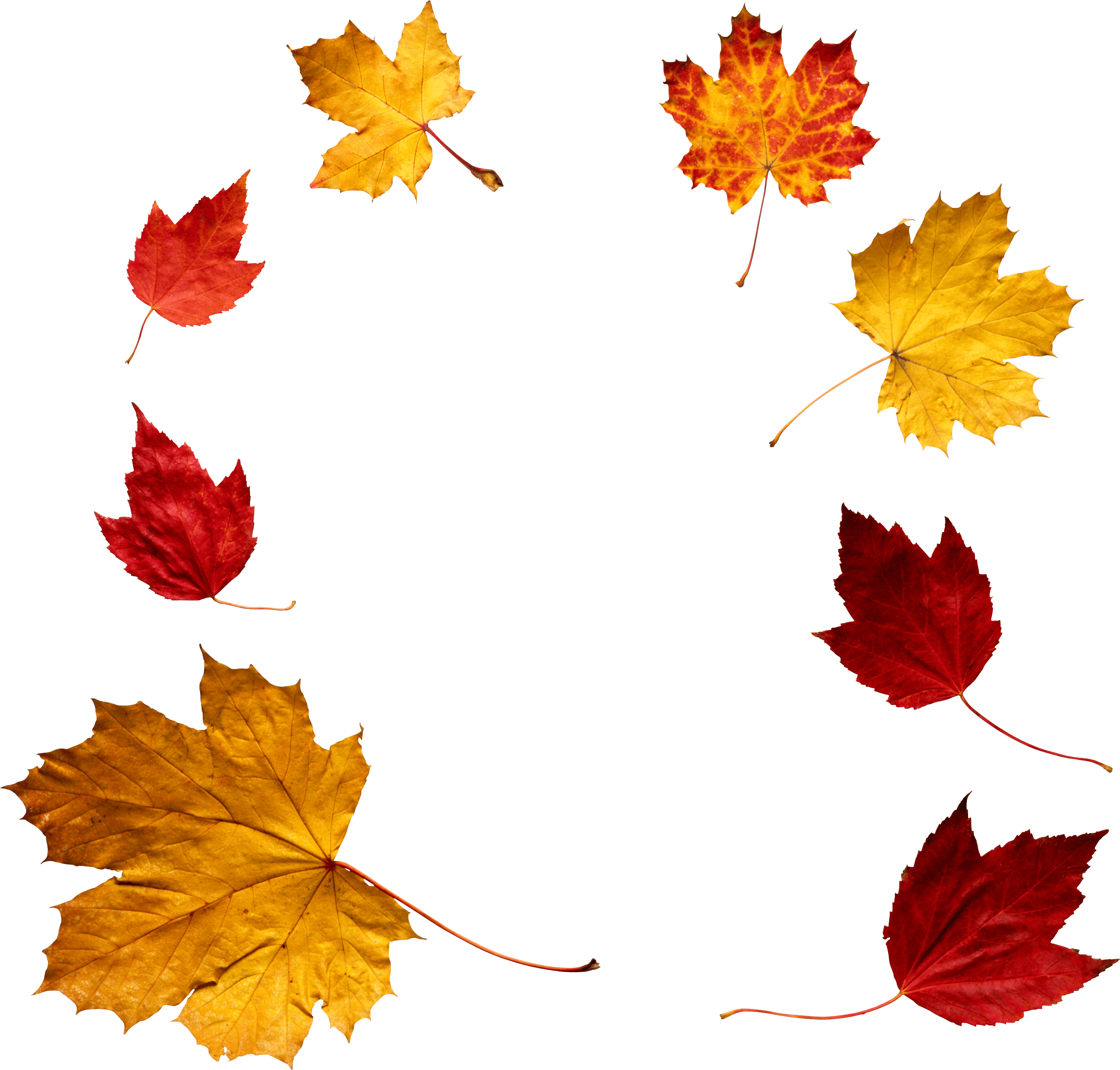 2889x2759 Download Autumn Leaves Free Png Photo Images And Clipart Freepngimg