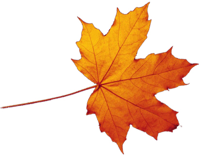 415x323 Autumn Leaves Png Images Transparent Free Download
