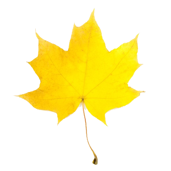 600x600 Fall Leaf Border Clipart