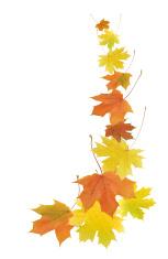 153x235 Autumn Leaves Border Stock Photos