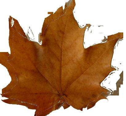 409x379 Autumn Leaves Clipart